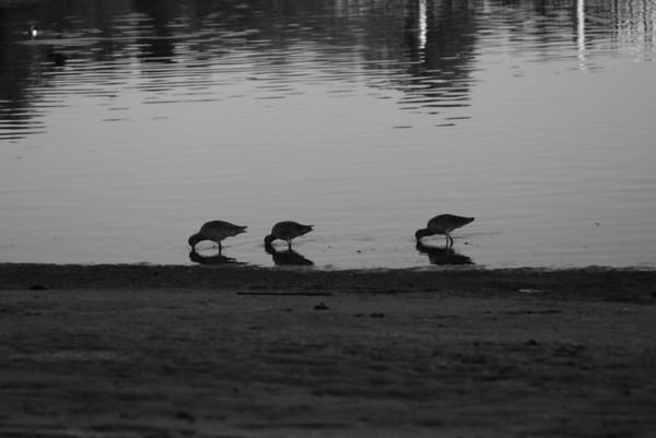 International Wetlands Day