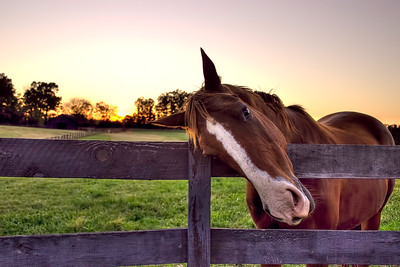 UC Beauty