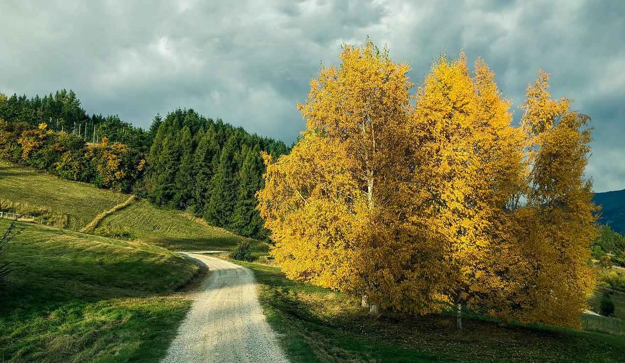 NZ Fall 2