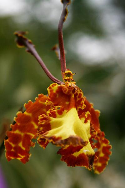 orchids 09 129.jpg
