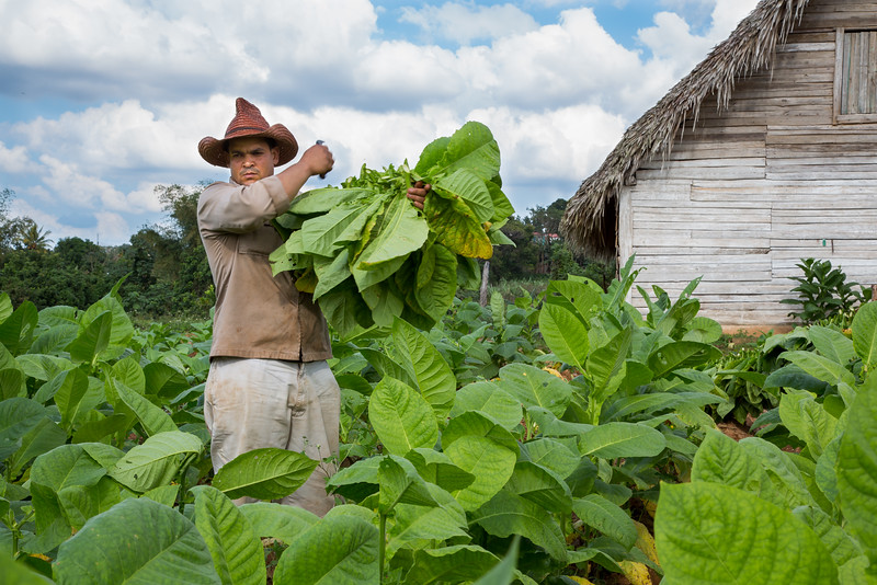 Tobacco Farmer.jpg