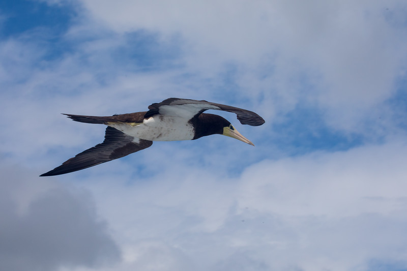 A seagull hovering over the ferry using its wake to keep aloft.