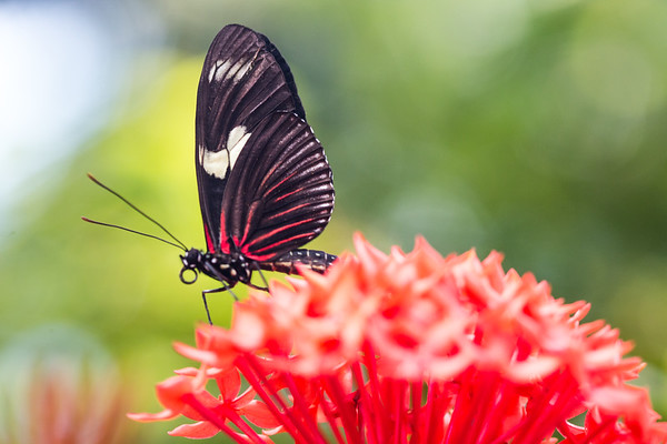 Animals, Insects, and Wildlife