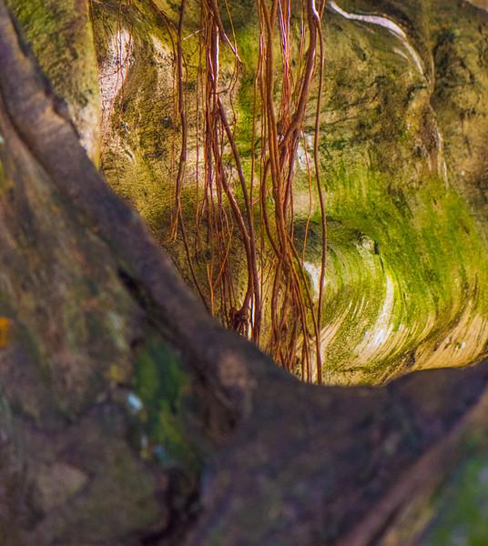 Banyan Tree 19