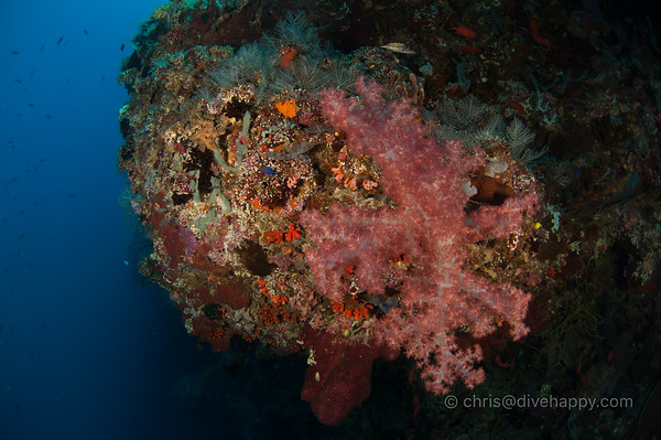 Tubbataha Reef Philippines 2017