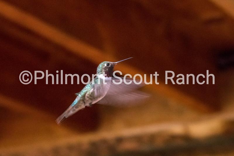 2017_SecondPlace_Animals and Wildlife_ThomasMejia_Flutter _Miranda _512.JPG