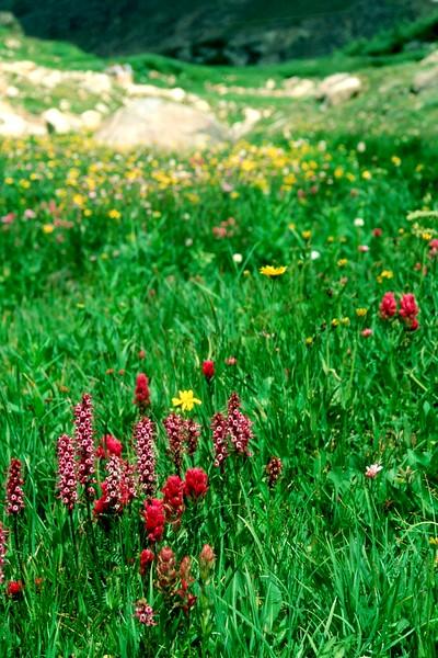 amh FLOWERS (1087).jpg