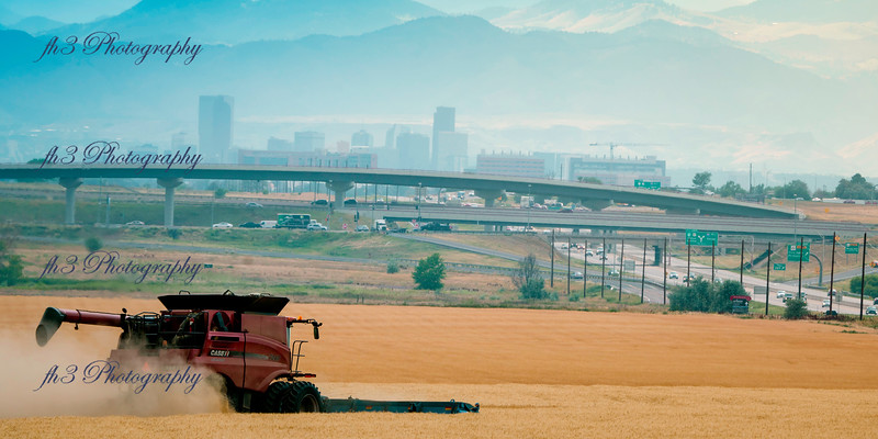 It's harvest time on the wheat, This field was just off I-70 and E470 looking west with Denver in the background.