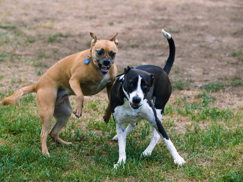 20140816_Dogs_28.jpg