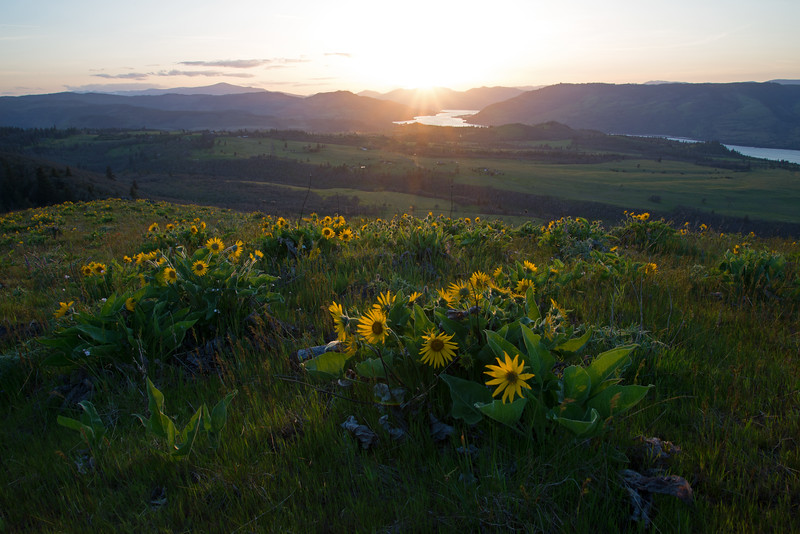 Wildflowers soak in the last light of the day high above the Columbia River in Oregon.