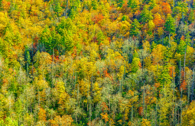 Limited Editions - Autumn In The Appalachian Mountains