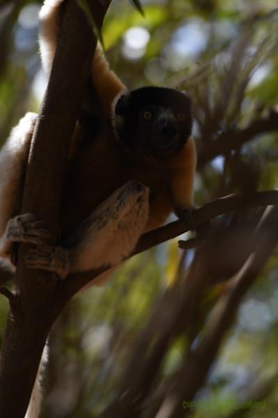 Madagascar 2017 (18)