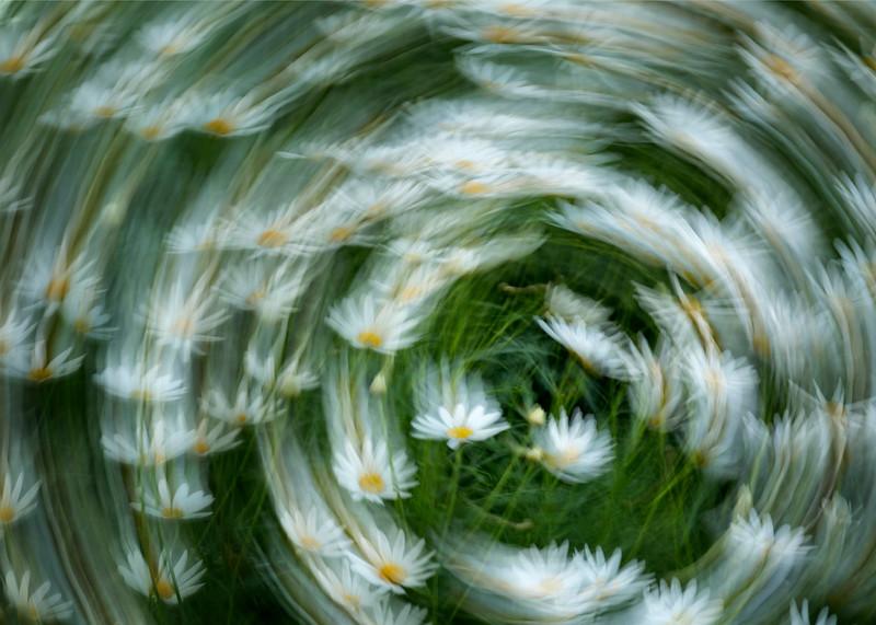 Flower Rotation