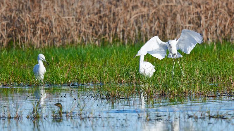 20181103 - Brazoria Wildlife Refuge-85B_3880.jpg