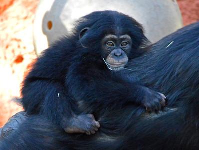 Lowry Park Zoo Animals Primates