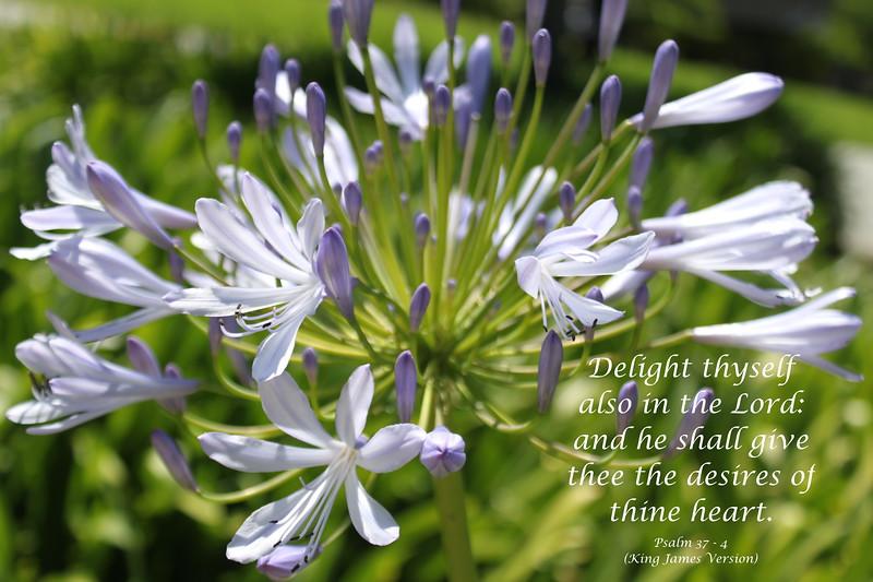 Psalms 37-4 .JPG
