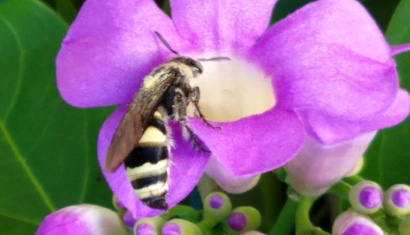 11_6_19 Queen Bee On Garlic Vine.jpg
