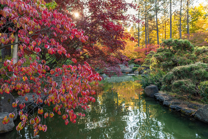 Japanese Garden in Red