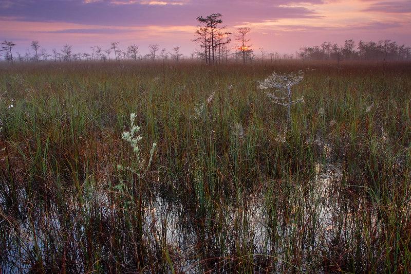 Pinelands Sunrise Everglades National Park Florida