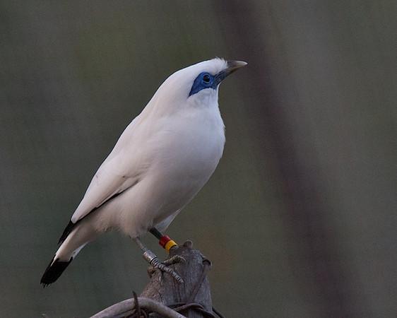 Globally Threatened Birds