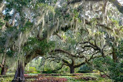 Brookgreen Gardens South Carolina 9-2017