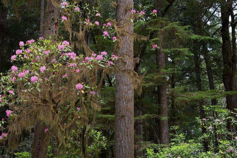 redwoodsFin-0960.jpg