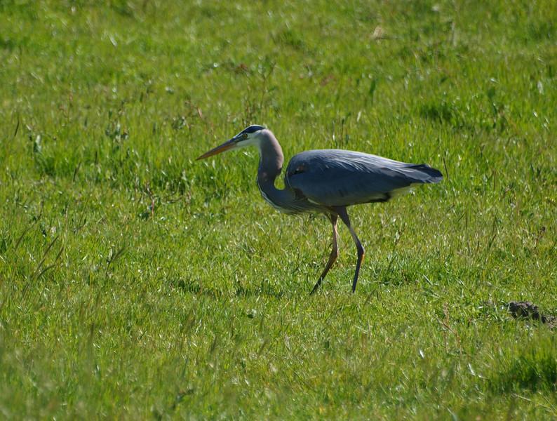 crane32.jpg