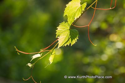 Fontenele Forest - August 19, 2012
