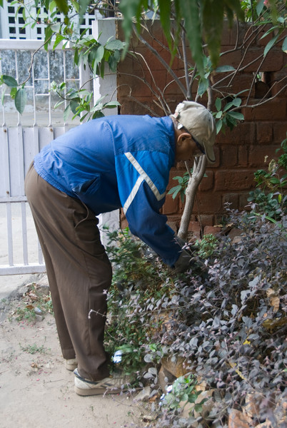 Vinodmama working in the garden, like he does every morning.