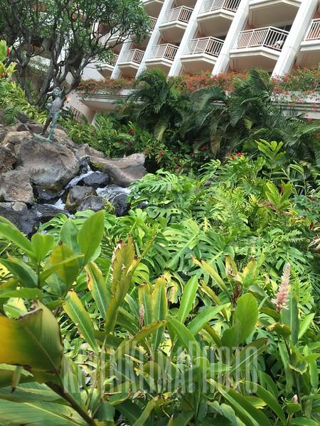 HawaiiPhonePics-426.JPG