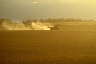Corn Harvest - Oct 18 2013