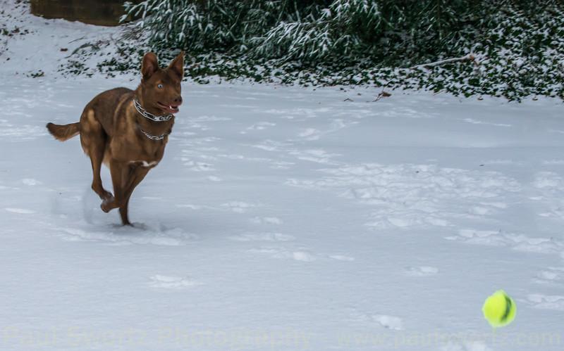 Atticus Snow Day Jan. 3