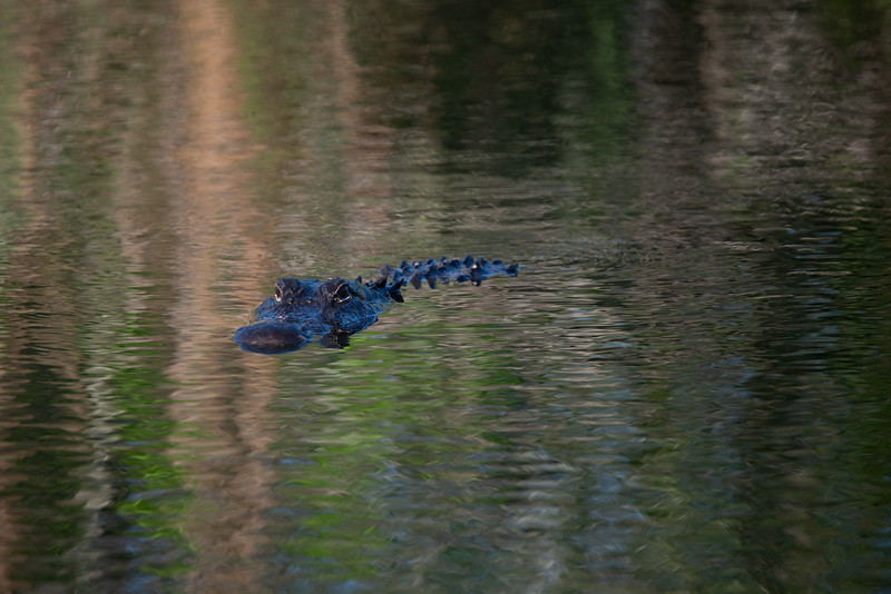 Everglades (59 of 60).jpg