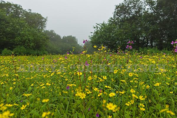 Flowering plateaus