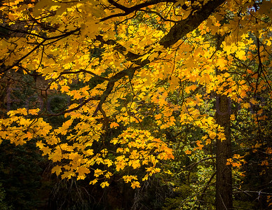 Autumn Color Gallery