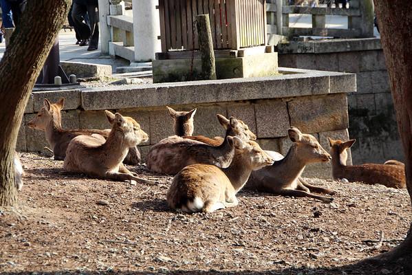 Nara and Gion 2-11-14