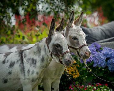 Donkeys :)