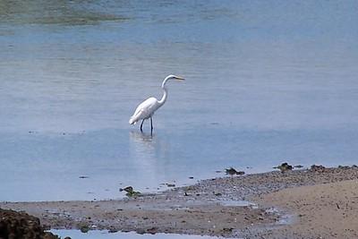 2005-08-27 birds