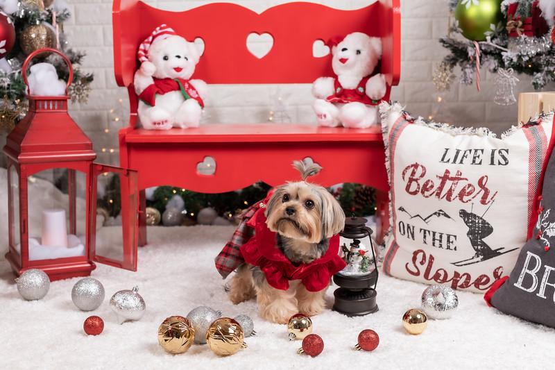 12.10.19 - Leide e Mel's (Mel Pet) Studio Christmas 2019 - -4.jpg