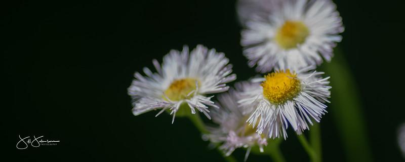 flowers-009.jpg