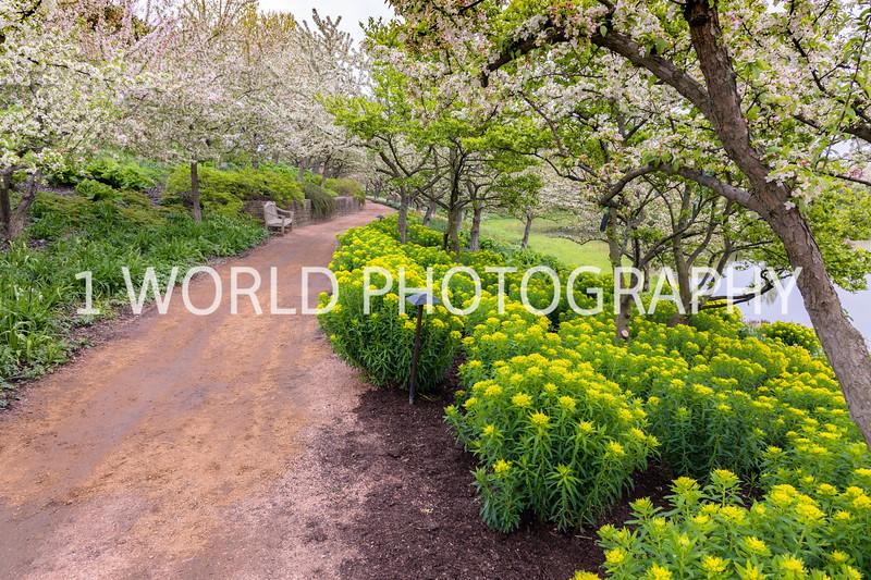 Chicago Botanic Garden Spring '17-218-46.jpg