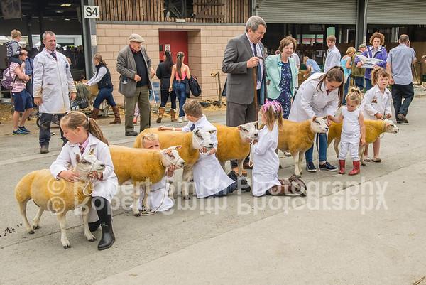 Beltex Sheep Society @Royal Welsh Show 2015