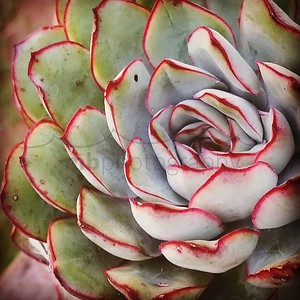 The most creative act you will ever undertake is the act of creating yourself. #deepakchopra #succulent #fractals #keokeagirl