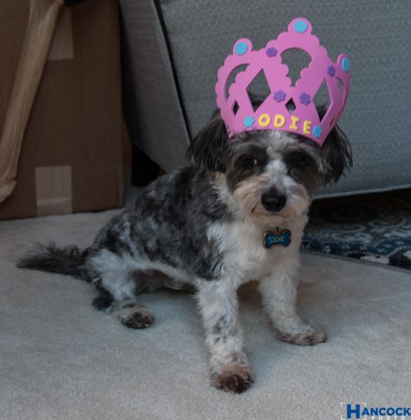 Callie 16th Birthday-091.jpg