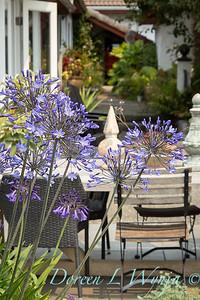 The Calhoun garden