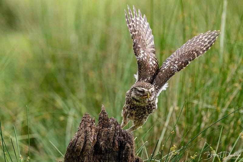 The Little Owl Shoot-6642.jpg