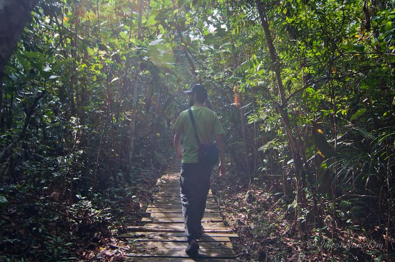 Borneo-Jungle-6781.jpg
