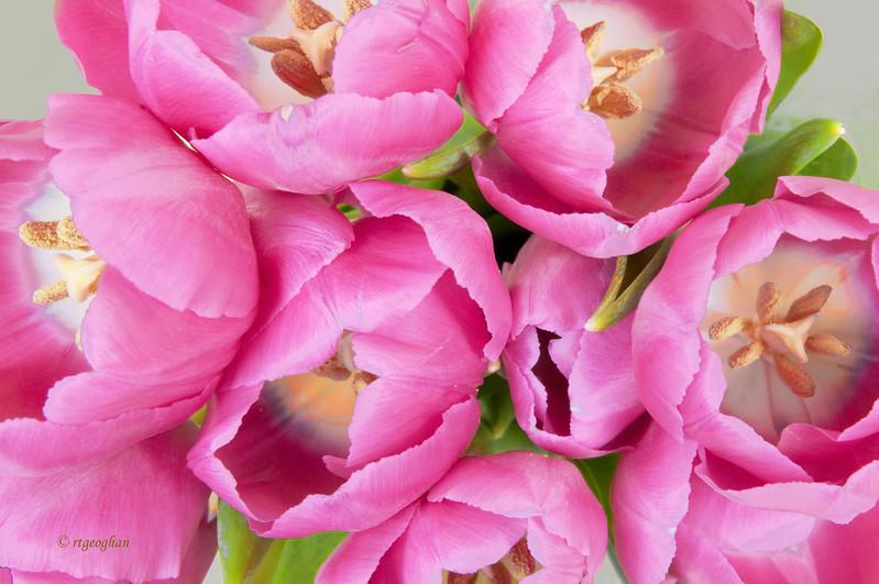 Mar24_Tulips_0546.jpg