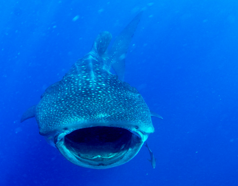 2014 Whale Shark - Cave Adventure-16.jpg