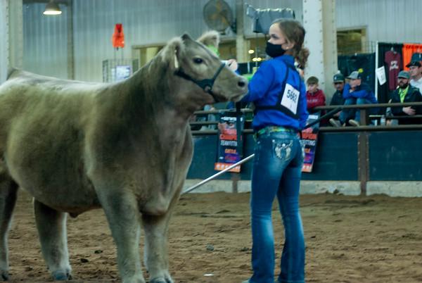 OCA Futurity Steer Showback 3/16/2021
